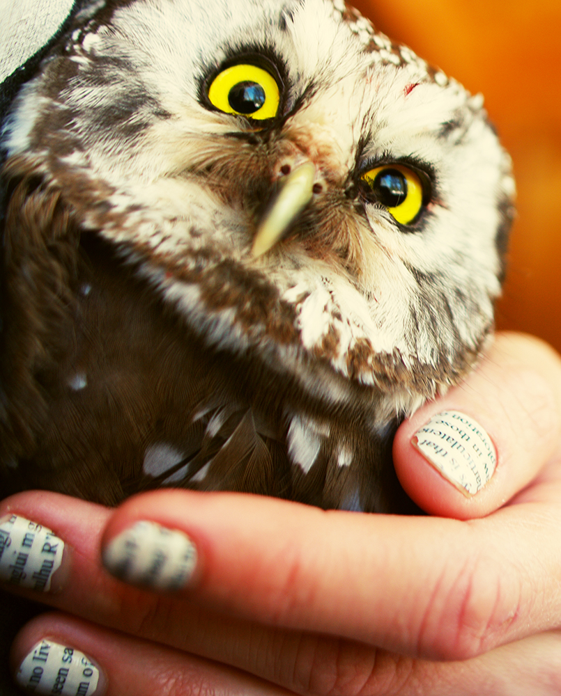WILT #28: Boreal Owls are Amazing